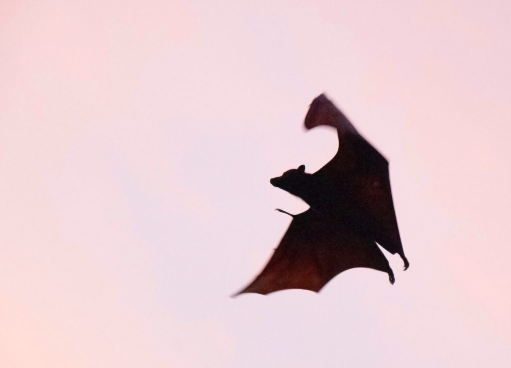 A brown bat flying through the sky - Photo by Igam Ogam on Unsplash