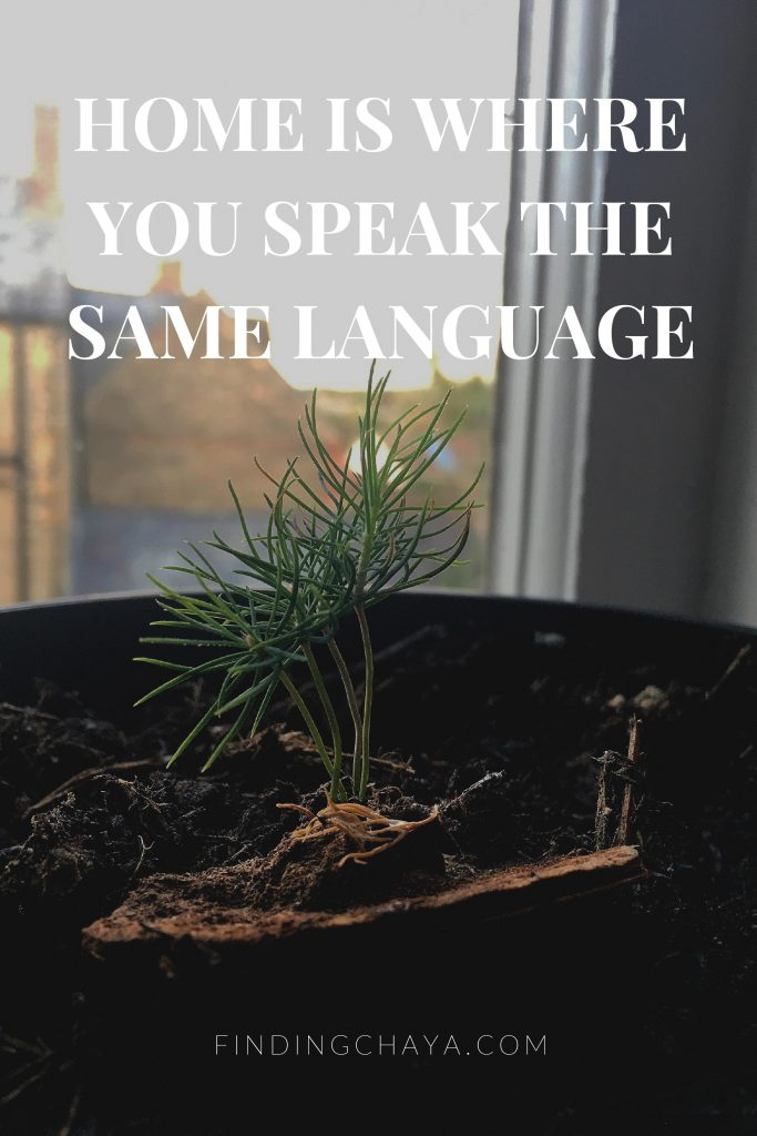 Text reads: Home is where you speak the same language - Thank you Hutchmoot Homebound. Image shows: a pine sapling in a pot on a window.